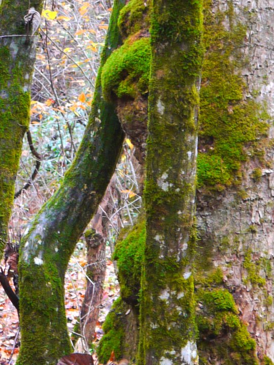 Image of a woodland face peeping round a tree