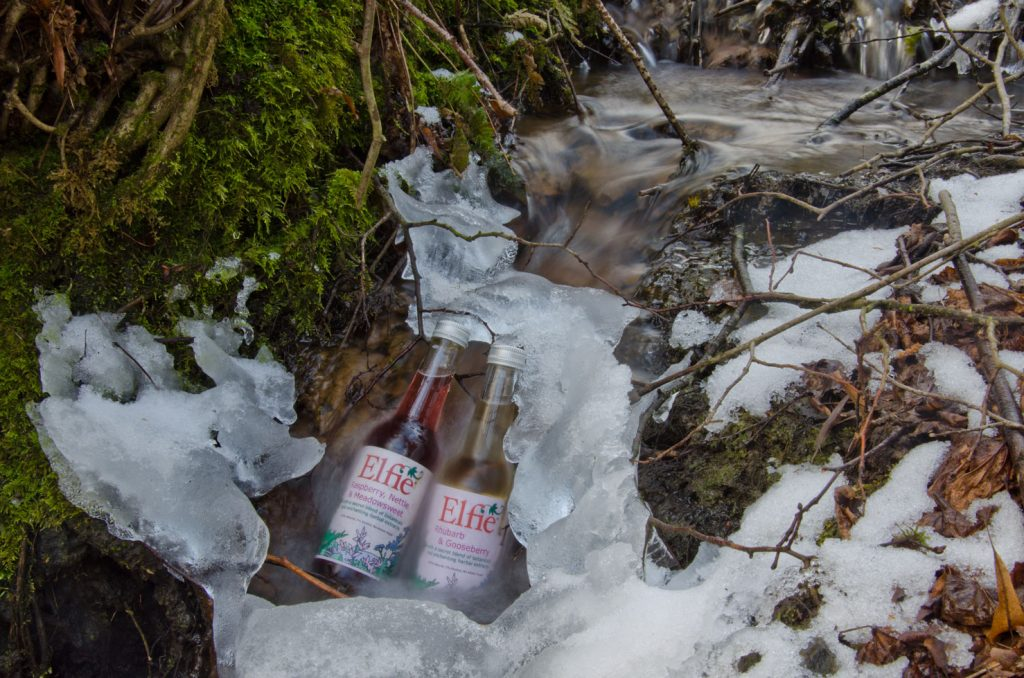 Elfie chilled in frozen stream © C Collis 2018